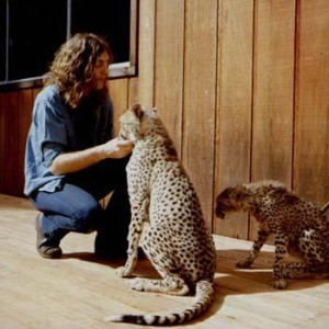 Lee Michaels and cheetahs